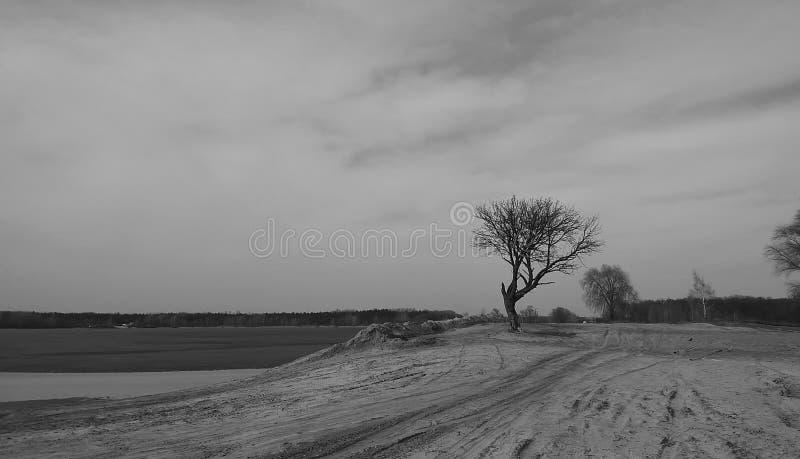 Drzewny czarny i biały krajobrazowy natury słońce obraz stock