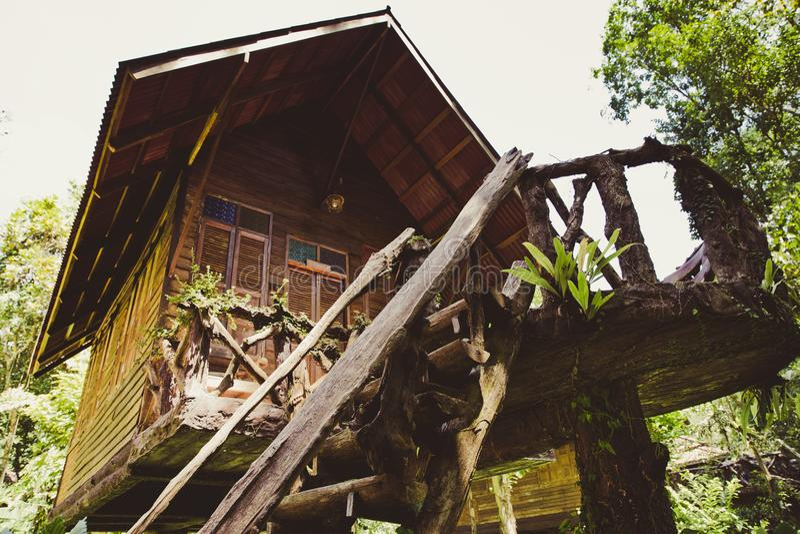 Drzewny dom zdjęcia stock