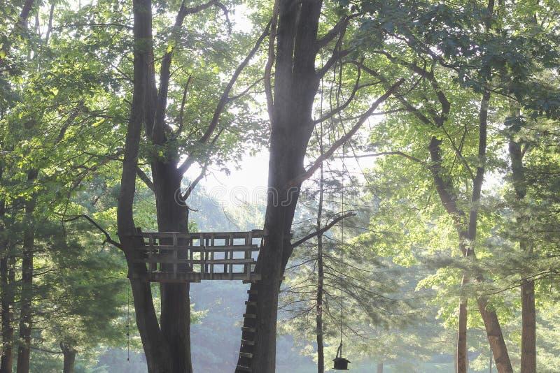 Drzewny dom z widokiem obrazy royalty free