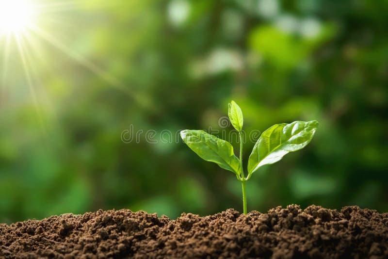 drzewny dorośnięcie w naturze z światłem słonecznym pojęcia eco ziemski dzień fotografia royalty free