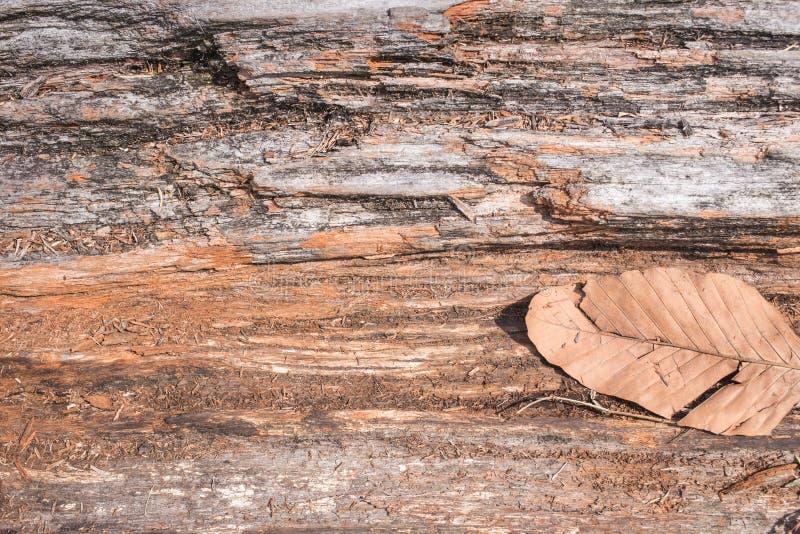 Drzewny drewniany szczegół w lesie zdjęcia stock