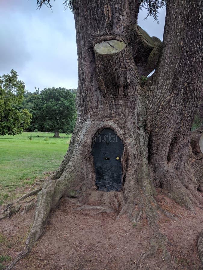 Drzewny drzwi zdjęcie royalty free