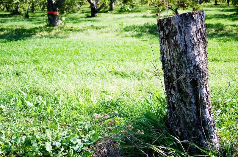 Drzewny Fiszorek Zdjęcia Stock
