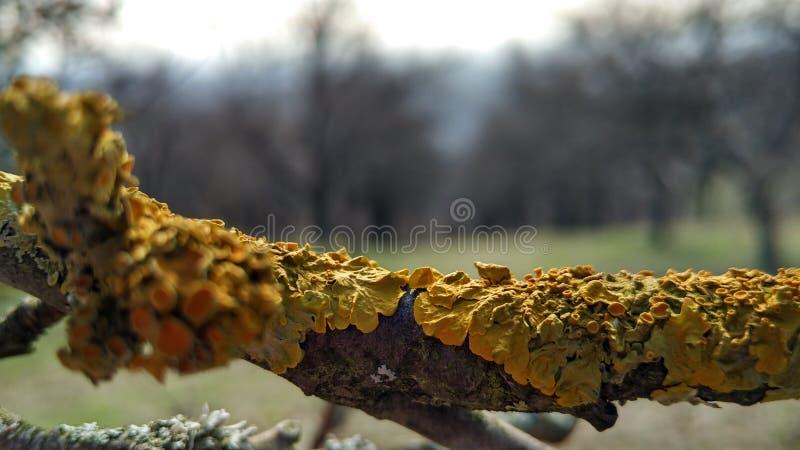 Drzewny grzyb obraz royalty free