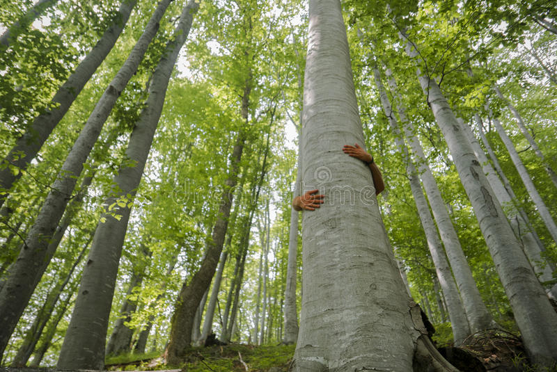 Drzewny Hugger zdjęcia stock