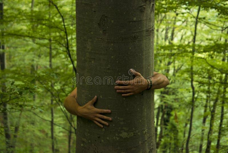 Drzewny Hugger fotografia stock