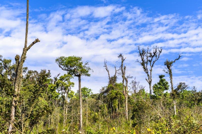 Drzewny i bluesky w Asia lesie tropikalnym obrazy royalty free