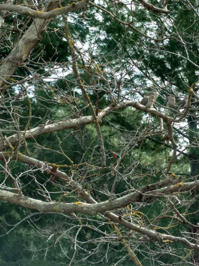 Drzewny jeziorny cunningham zdjęcie stock