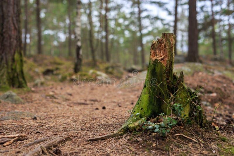 Download Drzewny Karcz Z Selekcyjną Ostrością Obraz Stock - Obraz złożonej z drzewa, puszek: 53780771