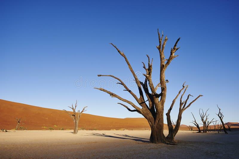 Drzewny kościec obraz royalty free