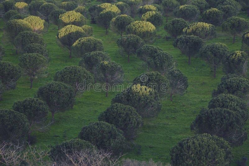 Drzewny Labirinth fotografia stock