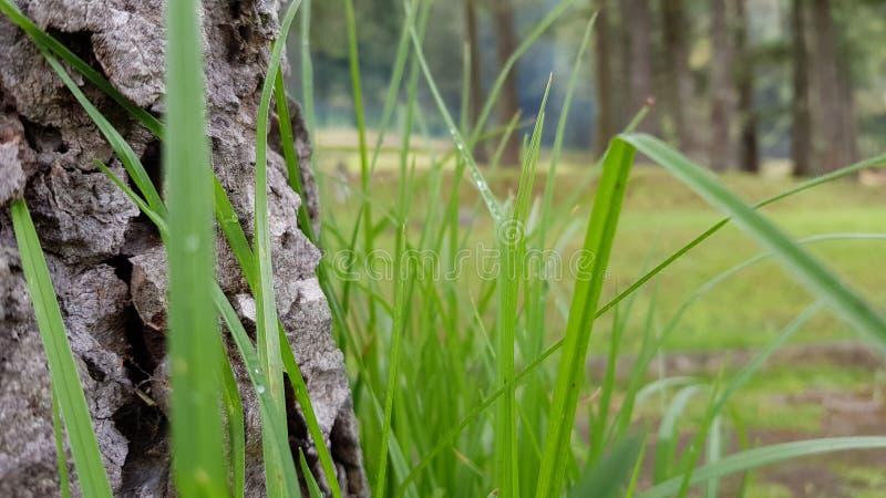 Drzewny las fotografia stock