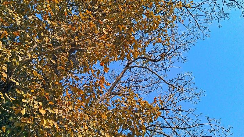 Drzewny liść obraz royalty free
