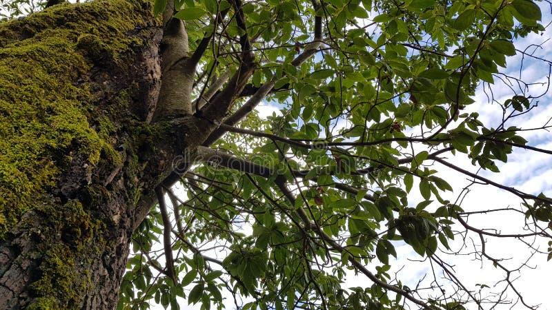 Drzewny niebo obraz stock