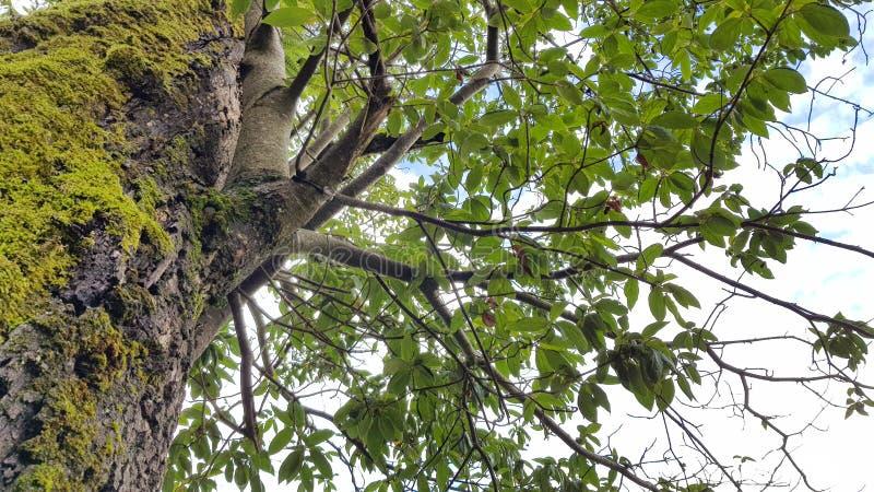 Drzewny niebo 2 obrazy royalty free