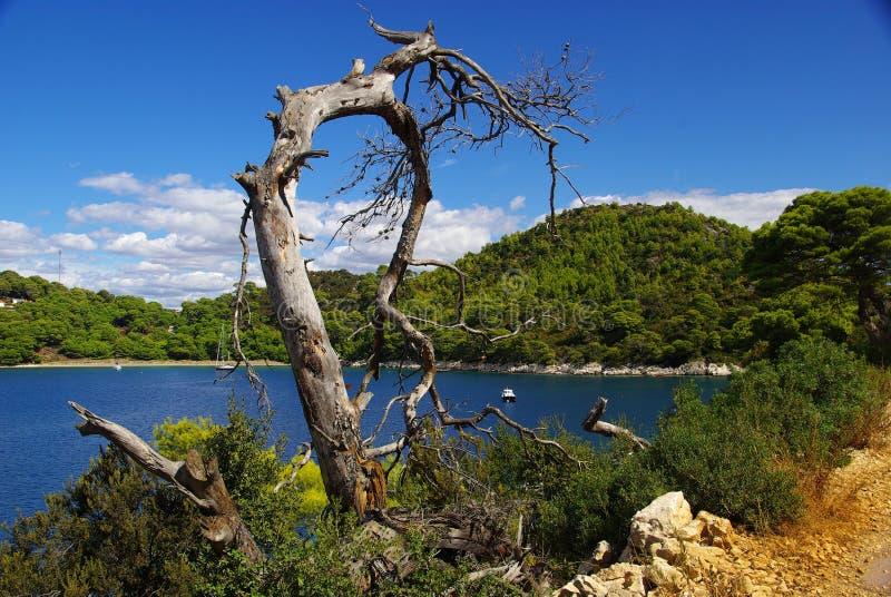 Drzewny nieboszczyk   zdjęcia royalty free