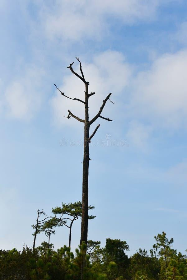 Drzewny nieboszczyk zdjęcie stock