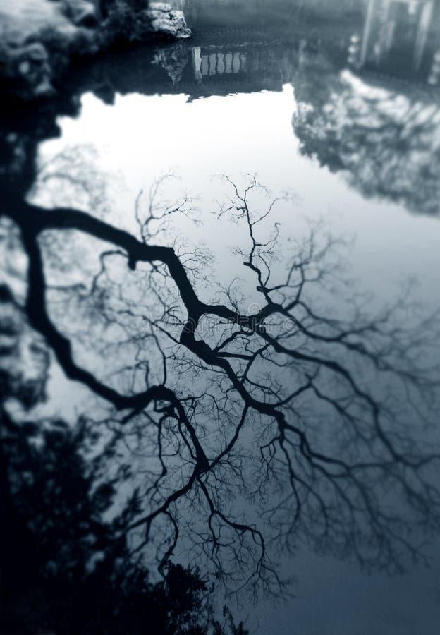 Drzewny odbicie w antycznym chińczyka ogródzie zdjęcie royalty free