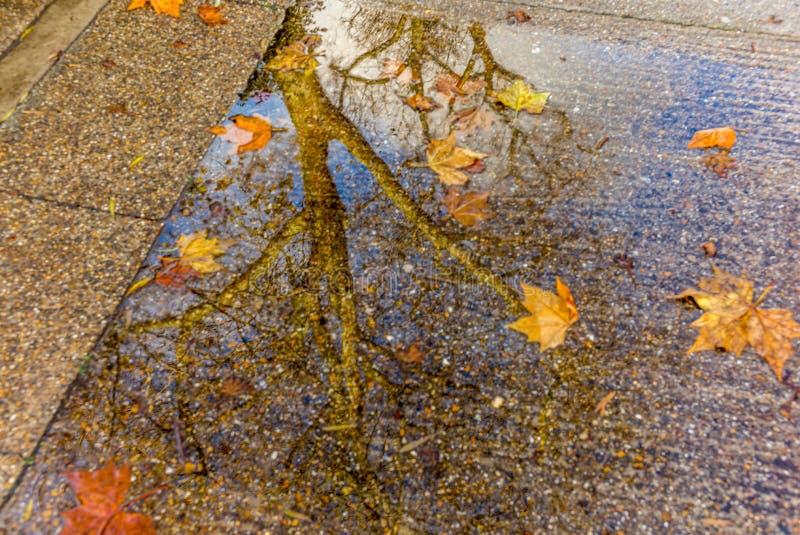 Drzewny odbicie w wodnej kałuży fotografia royalty free