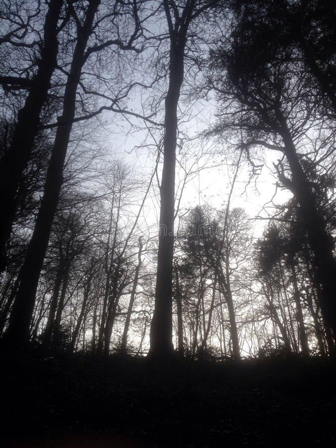 Drzewny pokój zdjęcia stock
