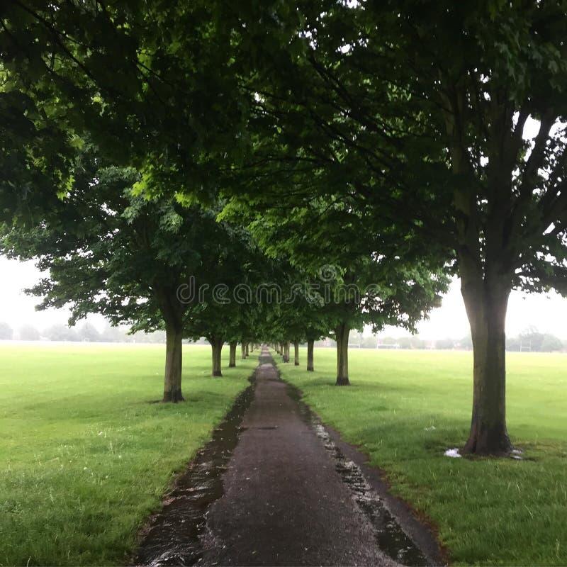 Drzewny przejście zdjęcia stock