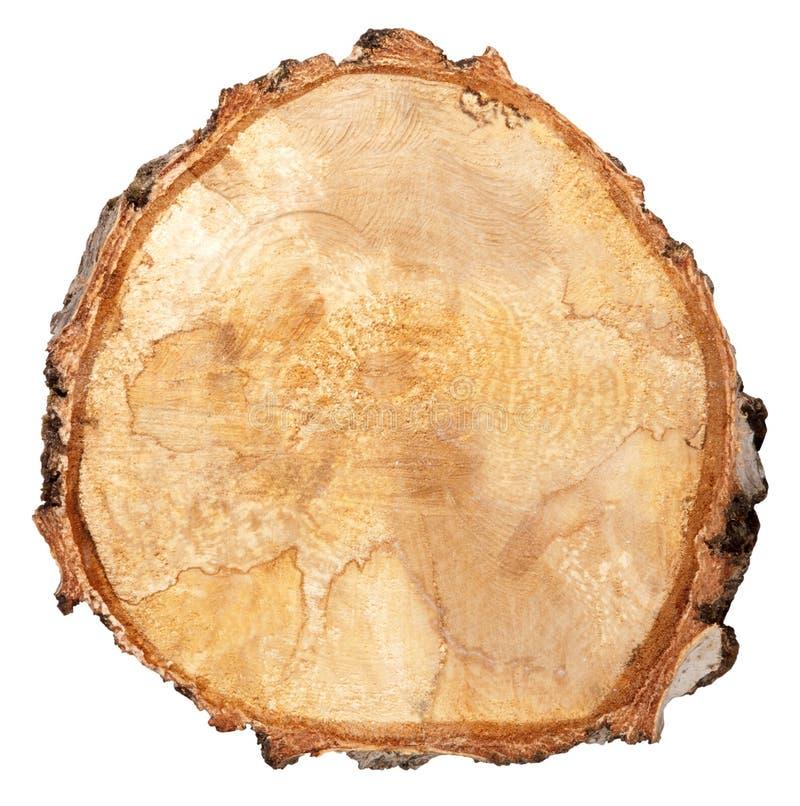 drzewny przekrój poprzeczny bagażnik zdjęcia stock