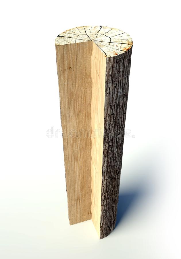 Drzewny przekrój poprzeczny bagażnik, przedmiot ilustracji