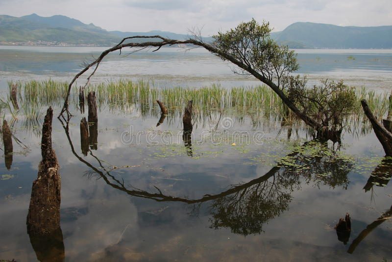 Drzewny przestawny wizerunek zdjęcie stock