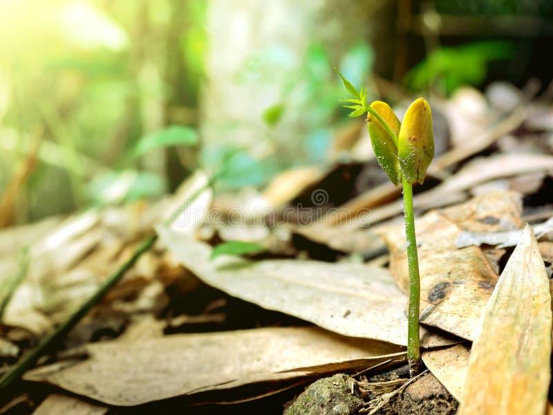 Drzewny przyrost fotografia stock