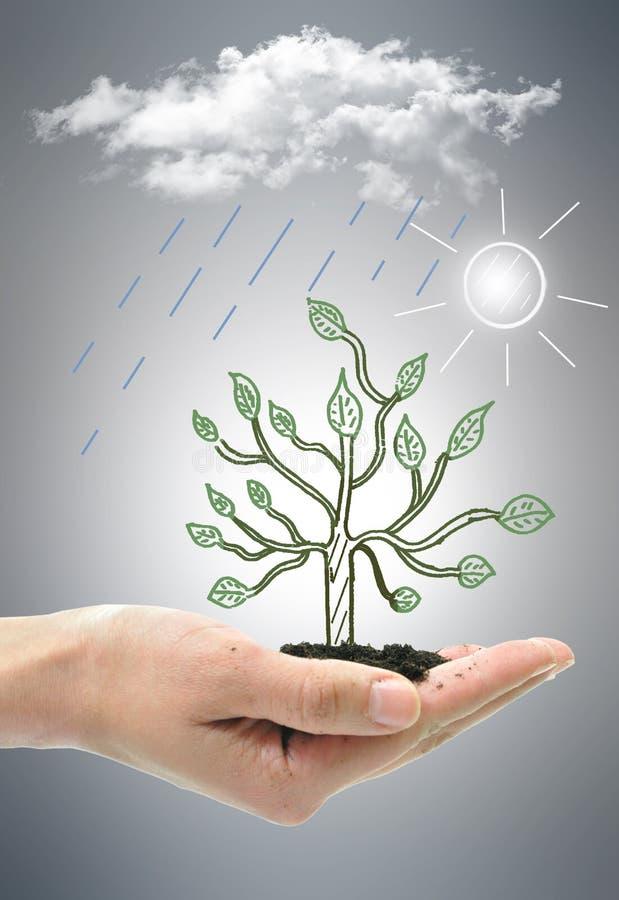Drzewny przyrost obrazy royalty free