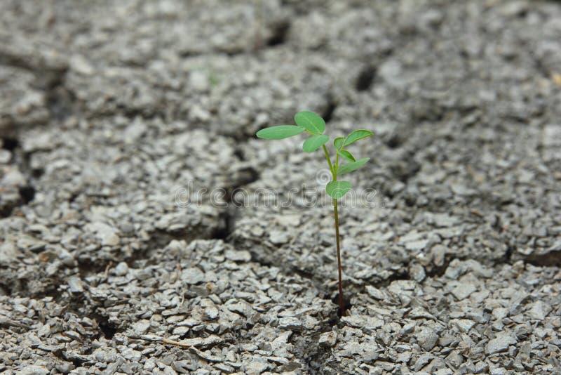 Drzewny przyrost na Krakingowej ziemi zdjęcie stock