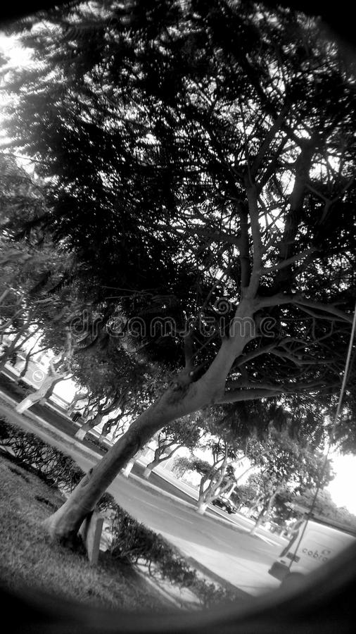 Drzewny rapsod w czerni zdjęcie royalty free