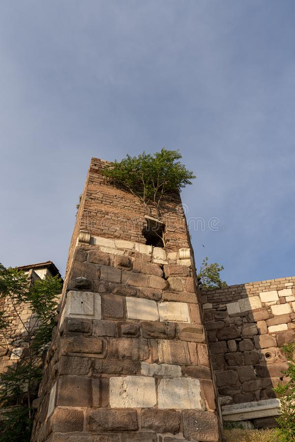 Drzewny sapling narastający w górę kamiennej ściany kasztel przez Pojęcie ustalający Drzewo przy ruinami Ankara kasztel zdjęcie stock
