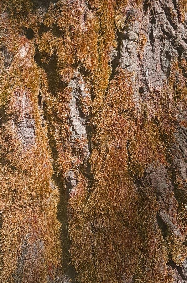 Drzewny szczegół z brązu kolorem zdjęcie stock