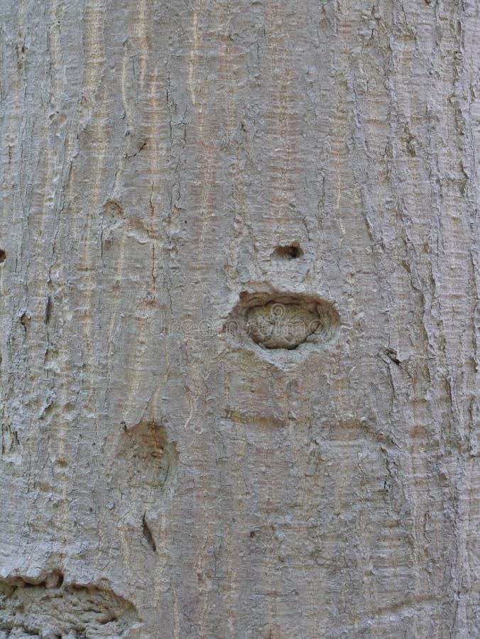 Drzewny tekstury tła wzór zdjęcie royalty free