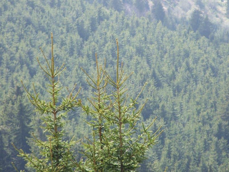 Drzewny tercet zdjęcia stock