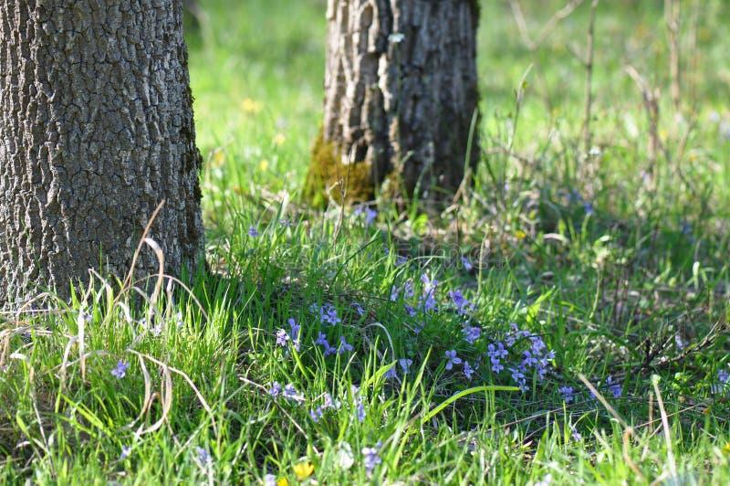 Drzewny thrunk obraz stock