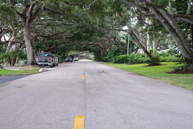 Drzewny tunel w sąsiedztwie obraz royalty free