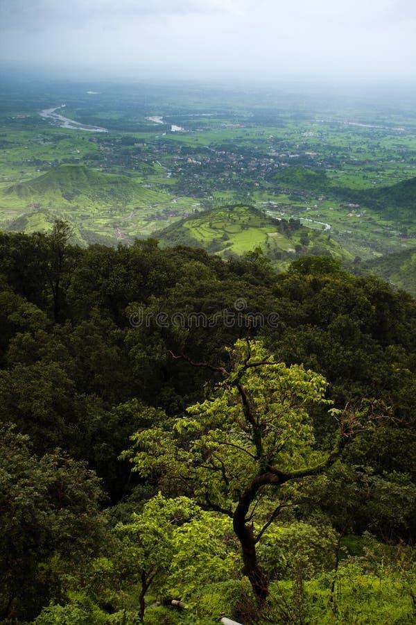 drzewny velley zdjęcia stock