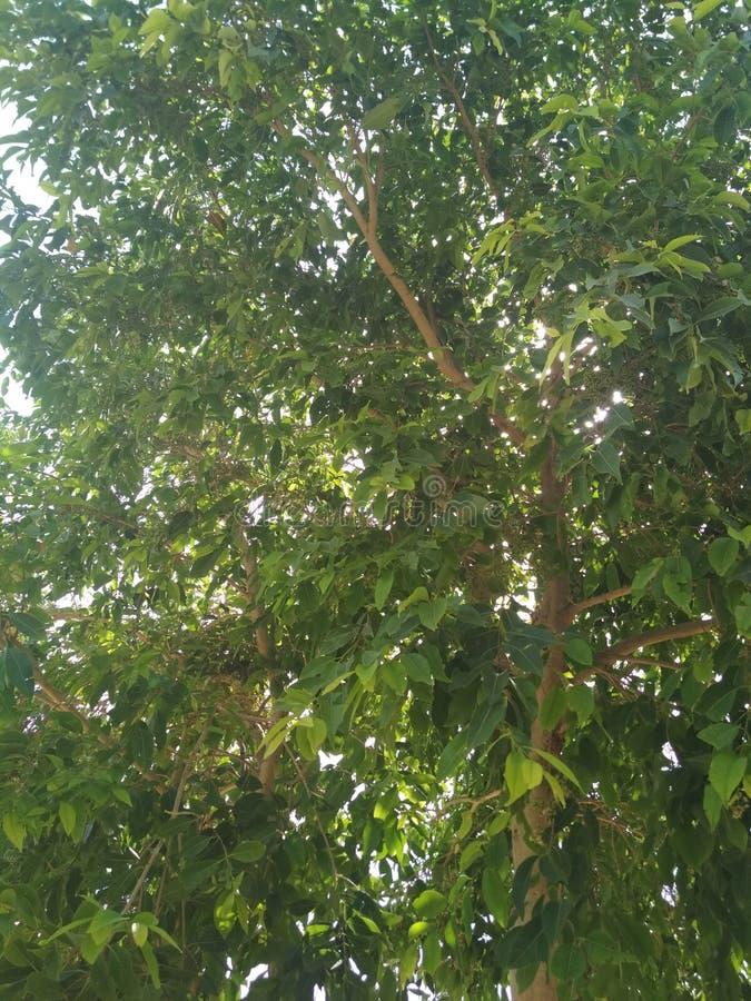 Drzewny widok fotografia royalty free