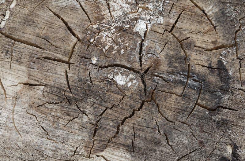 Drzewnych pierścionków zamknięty up obraz stock