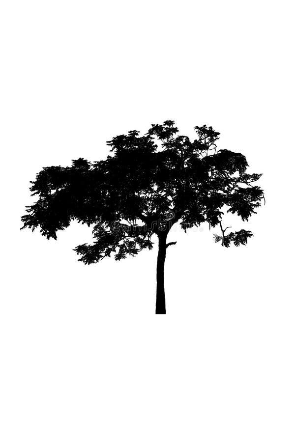 Drzewnych sylwetek piękny odosobniony na białym tle zdjęcia stock