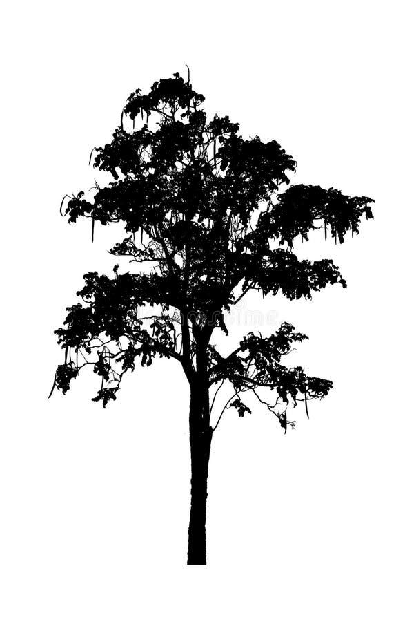 Drzewnych sylwetek piękny odosobniony na białym tle obraz royalty free
