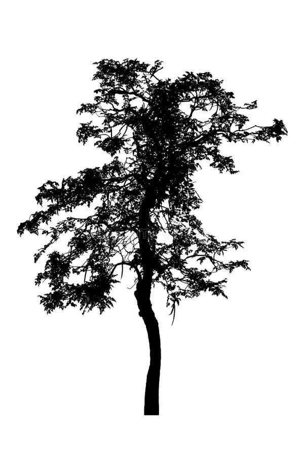 Drzewnych sylwetek piękny odosobniony na białym tle obraz stock