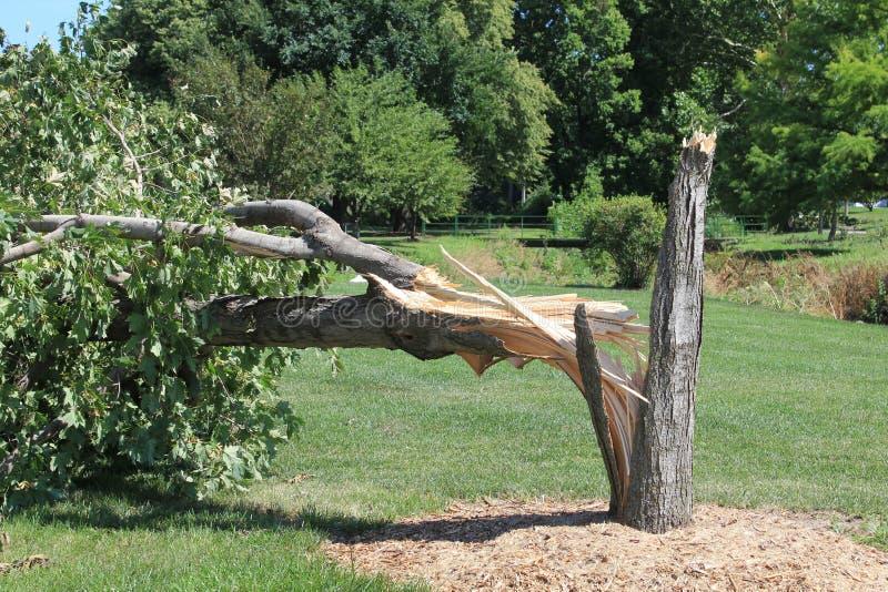 Drzewo łamający burzą z odszczepiającym bagażnikiem obrazy royalty free