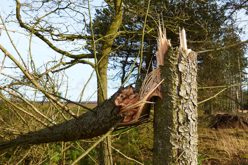 Drzewo łamający w burzy fotografia royalty free