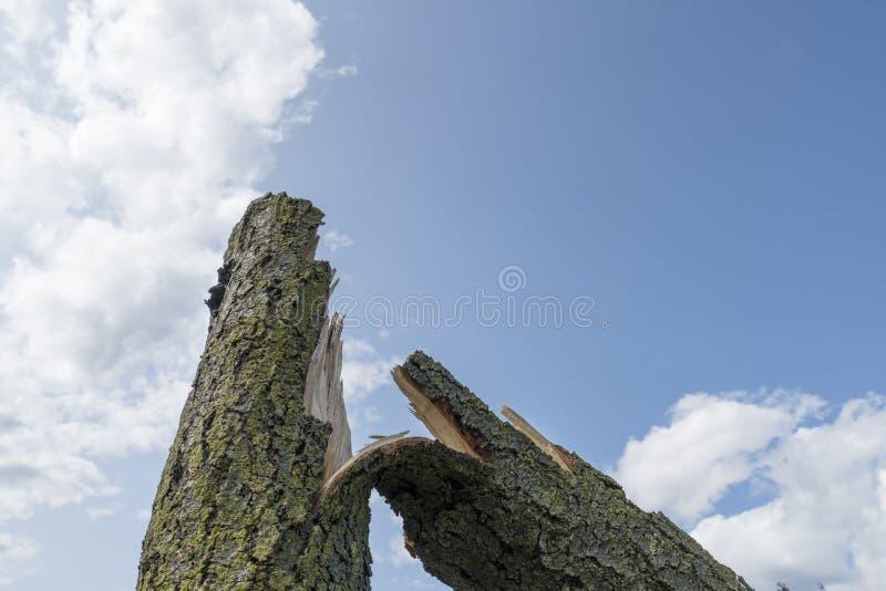 Drzewo łamający wiatrem obraz stock