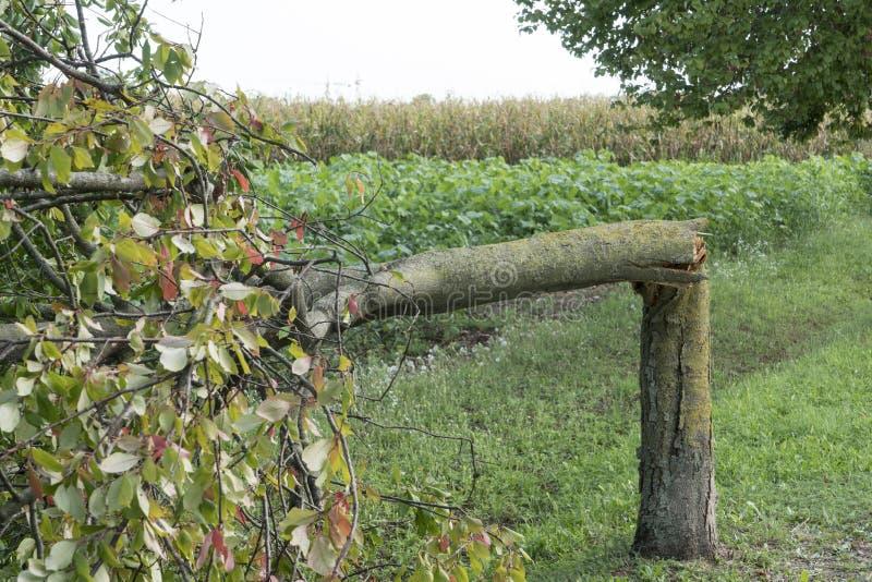 Drzewo łamający wiatrem zdjęcia stock