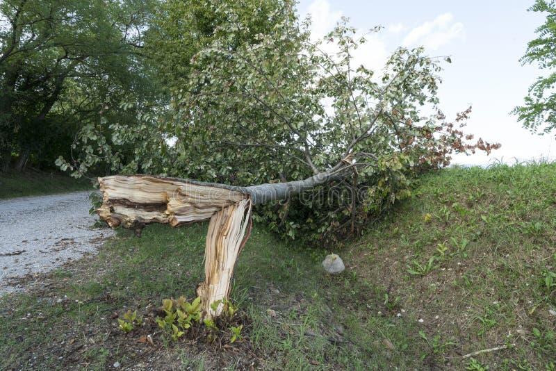 Drzewo łamający wiatrem obrazy stock