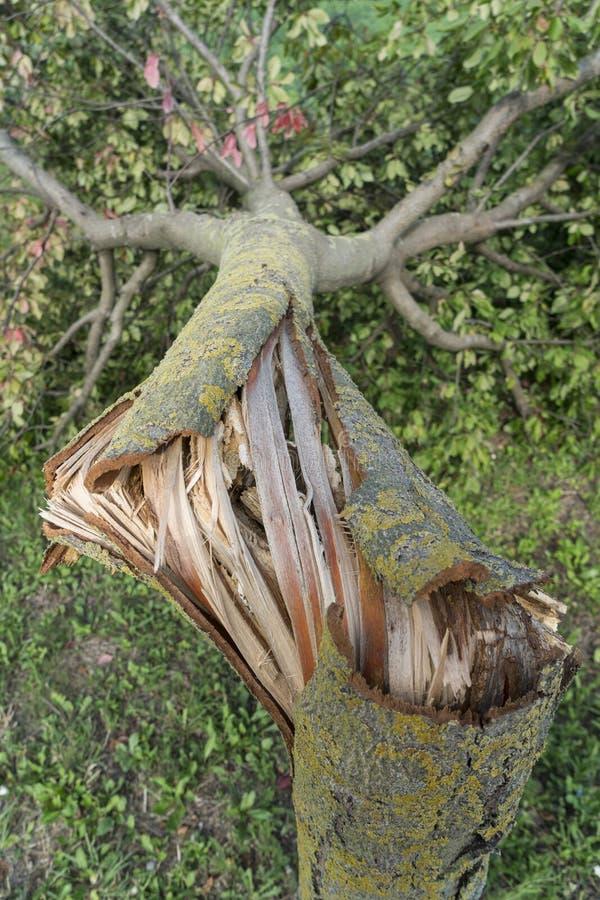 Drzewo łamający wiatrem zdjęcie stock